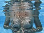 Testing out our new underwater camera in the swimming pool at home.