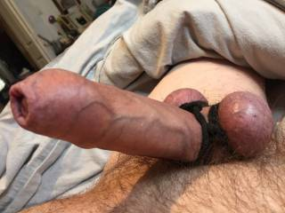 nice veiny cock for the ladies to suck, chew, and fuck Better shaved smooth for oral fun. I use a nitrile ring to gather my balls as they are huge, much to my girlfriends amusement (she loves giving me a bj)