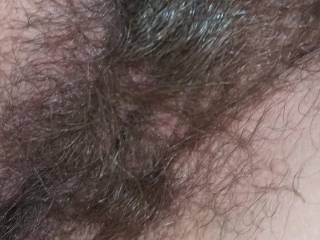 My hairy pussy for you