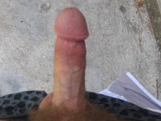 Thats the way a mans cock is to be seen!!!   NICE