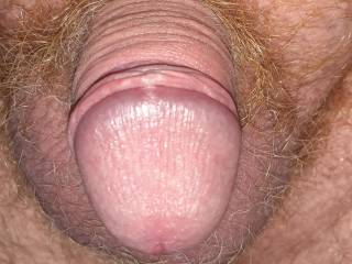 Close up shot of my little cock