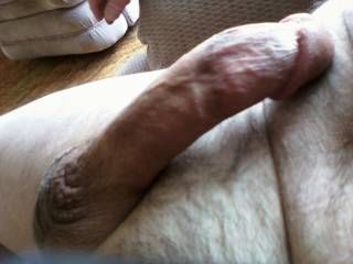 Lunchtime. Pants down, cock erect. Ready to feed you...