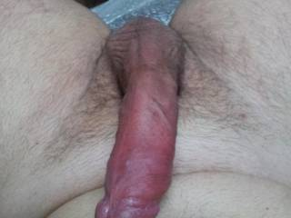 hairy cock for hairy pussies.