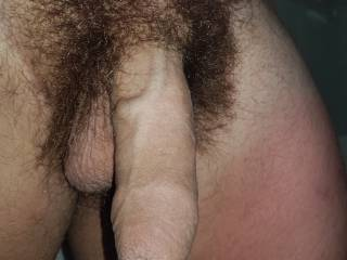 Hairy young bull ��.