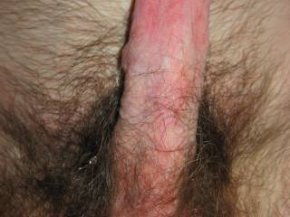 My big hard cock and balls. Want to suck me till I cum?