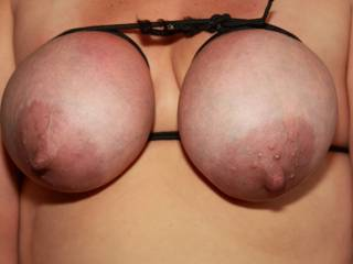 Clamp and peg her thick nipples until she whimpers and feed her some meat while I tugged those big nipples