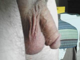 His beautiful big full balls and soft cock, waiting to be played with, anyone want to help empty these and get the creamy treat inside?