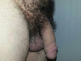 My soft, hairy cock! Is there to much hair?