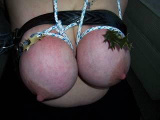 wonderful use of those heavy udders...now stretch those big nipples tight