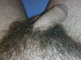 my hairy dick, what are your thoughts ?