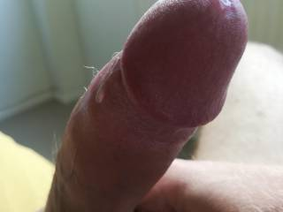 Some precum for a horny lady to lick off. Anyone?