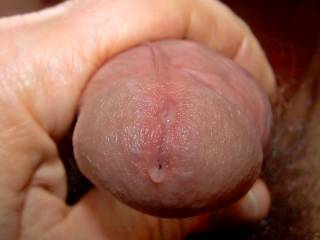 My cock is dripping for a pussy dipping!