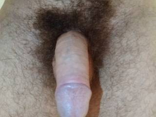 Just my soft hairy cock before it got nice and hard! Need a helping hand!!