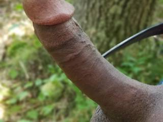Forest BBC ready for action. Meet me in the woods ready to be filled in all your holes...