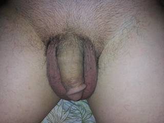 I just trimmed my pubic hair off of my penis. What do you think? Should I let it grow back or keep it trimmed?