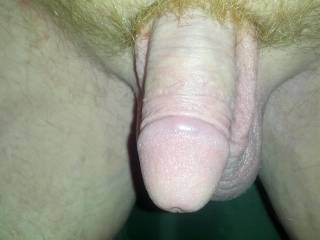 I'm still not sure about my cock. What do you hot zoig ladies think of it?
