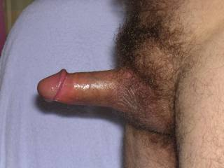 delicious cock surrounded by a fine bush - r u hairy all over?