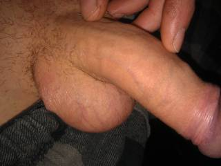 Fat cock before I have a wank over a certain zoig member.
