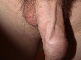 woke up and my cock was soooo veiny today, thought I would take a pic