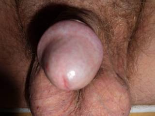Frontal view of my dick in light erection with withdrawn foreskin.