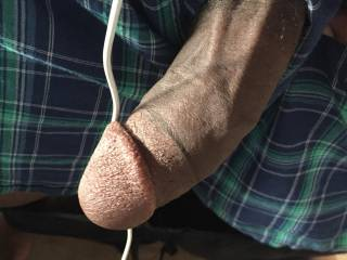 A pic of my dick
