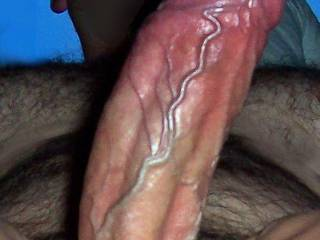 beautiful cock stiff, with incredible large veins