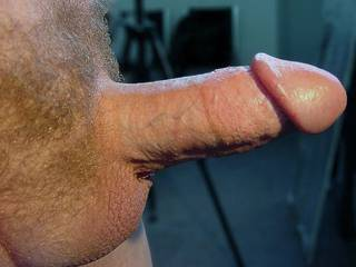 my hubby`s erect cock