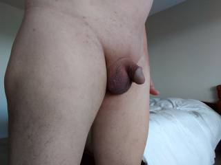 A friend wanted a few pic's of a resting cock....See there is no relation to soft and hard