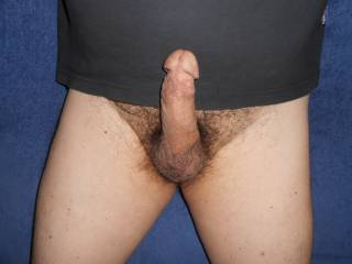 I was horny so got my hairy cock out and played it hard. Then jerked till I spermed.