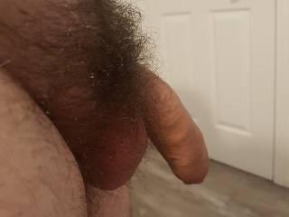 My hairy cock