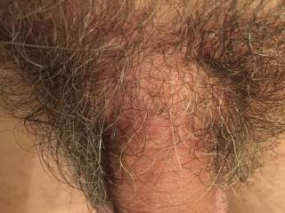 Hairy cock