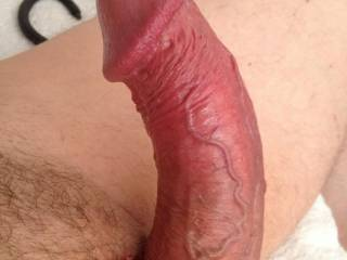 showing my hard cock with a new pink ring