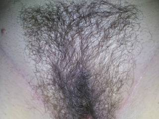 here hairy pussy trimmed up.