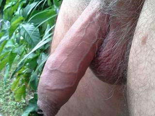 Who likes an old cock?