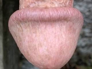 Can you believe the size of Mr. F's mushroom head, even when he's flaccid?  No wonder I cum so quickly every time he fucks me!  From Mrs. Floridaman