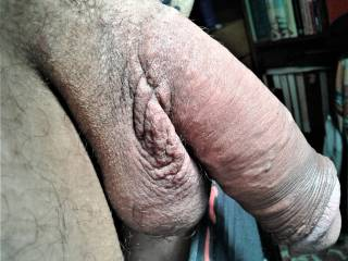 my sweet cock waiting to you