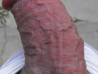 a closeup of my veiny cock waiting for action