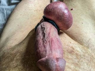 Turned on looking at me hard cock and the pain from the cock rings.
