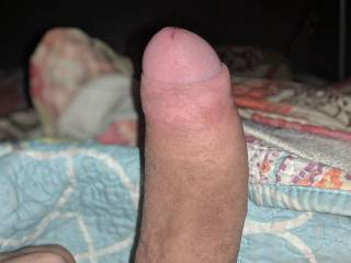 hard uncut cock ready to be sucked