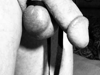 Cock tied up.