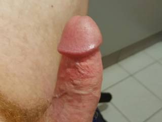 My stiff hairy ginger cock, all I need is someone to suck it.