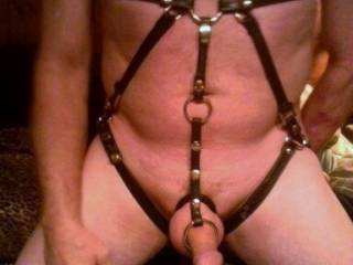Stunning!! Looking very good. The harness frames you very well. Thanks.